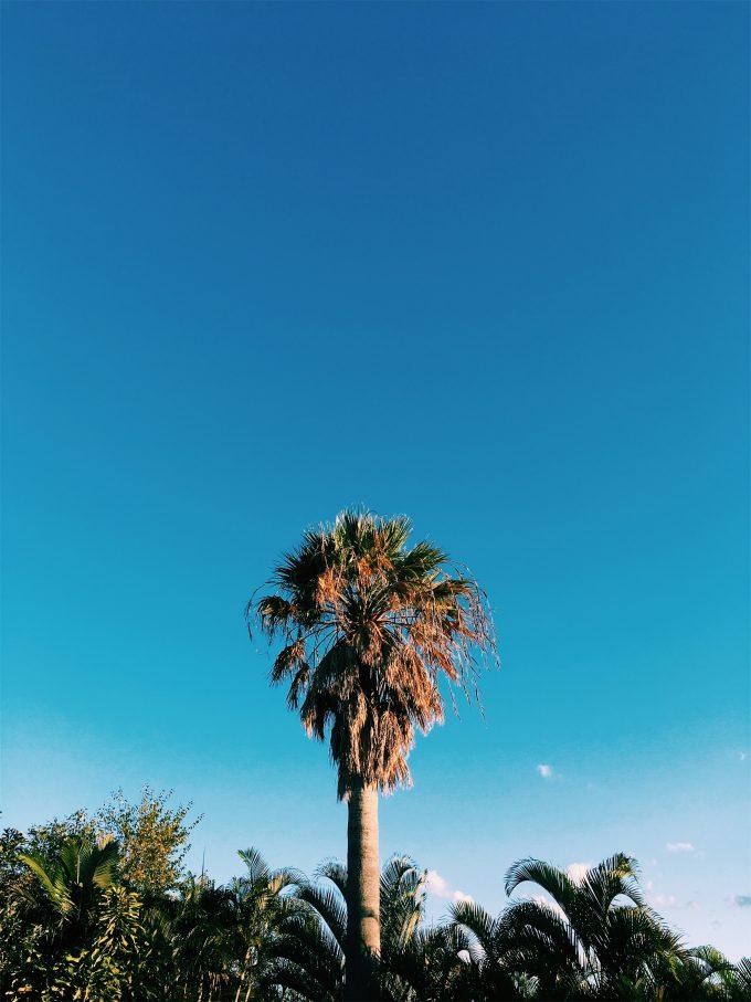 ゴールドコーストの友達の庭の大木