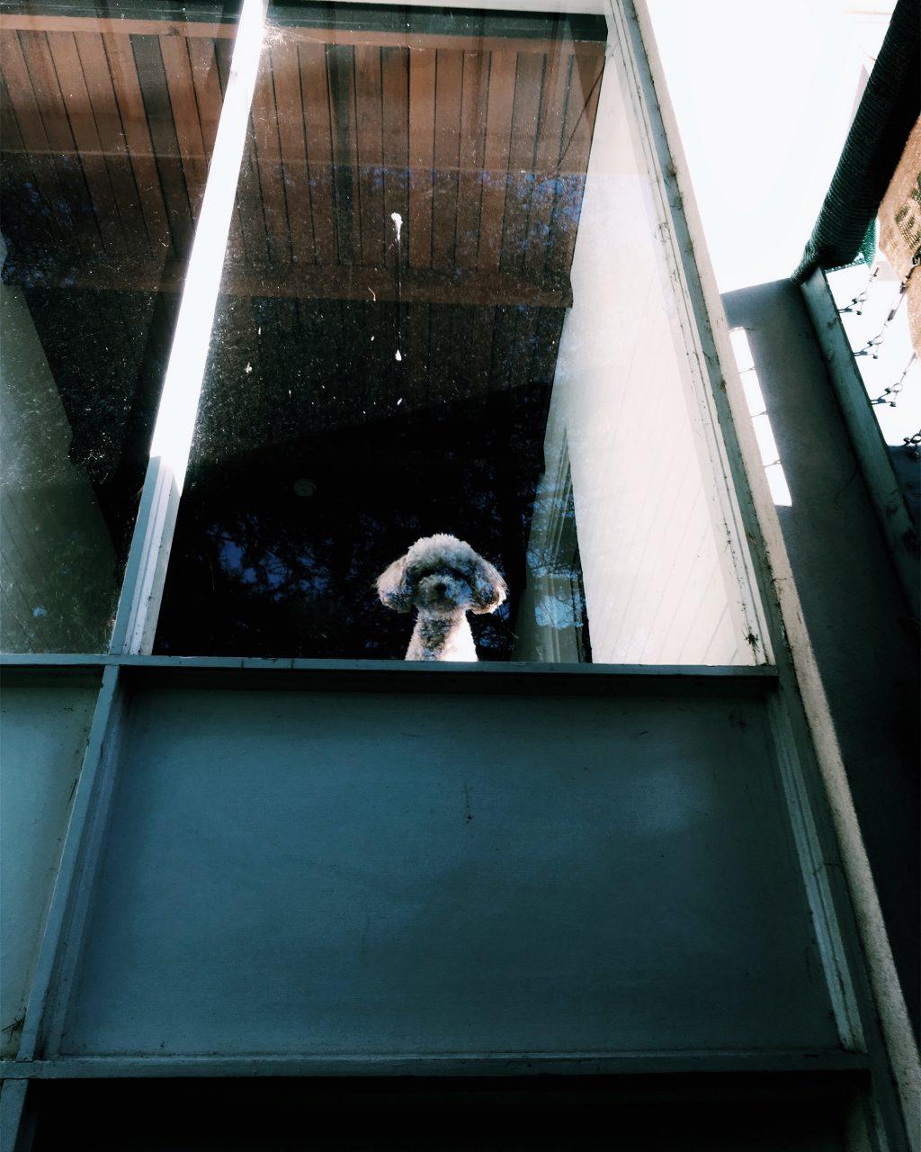 ミネの愛犬アロエちゃんの見送り